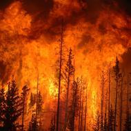 Fire Forest. Photo: Cameron Strandberg